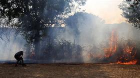 Muğla'daki yangında 1,5 dönümlük tarım arazisi zarar gördü