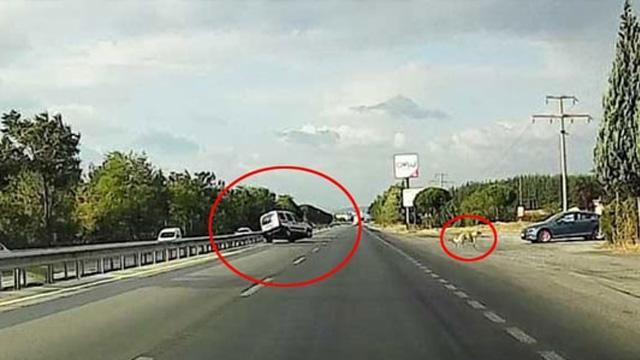 Balıkesir-İzmir yolunda köpeği ezmemek için takla attı: Allah cezanı versin köpek senin tüh!