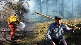 Bolu'da çıkan orman yangınında 10 dönümlük alan zarar gördü
