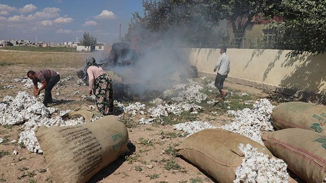 Şanlıurfa'da hasadı yeni yapılan tonlarca pamuk yandı