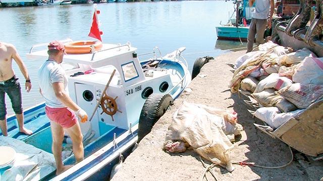 Denizden çuval çuval ölü tavuk çıktı