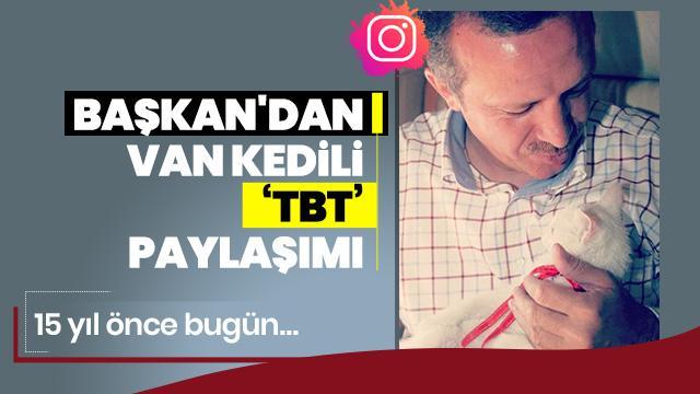 Başkan Erdoğan'dan Van kedili 'tbt' paylaşımı!
