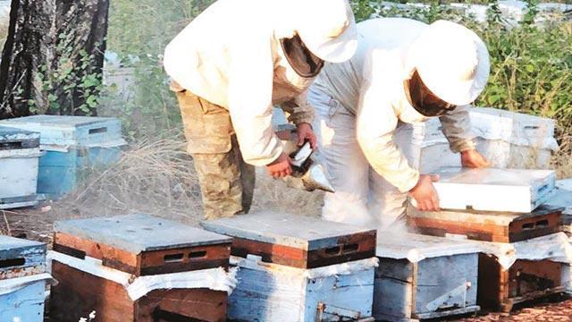 Arı kovanındazehir sevkıyatı