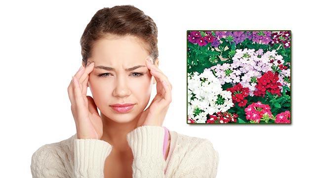 Migrene mineçiçeği