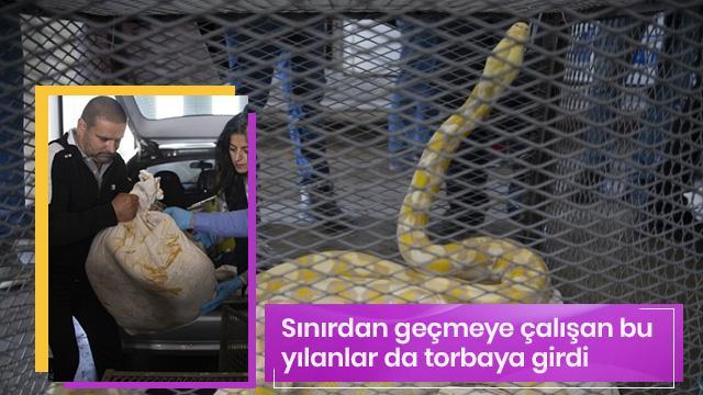 Kapıkule'de Bulgar plakalı araçtan çıkanlar şok etti