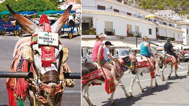 Obez turiste eşek yasağı