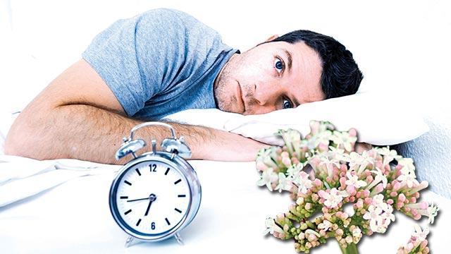 Uykusuzluğun çaresi kediotu
