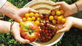 Tüketici organik tarıma güvenmiyor!