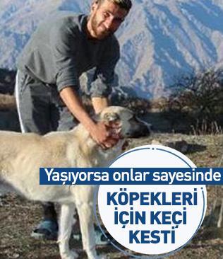 Erzurum'da kendisini ayı saldırısından kurtaran köpekleri için keçi kesti