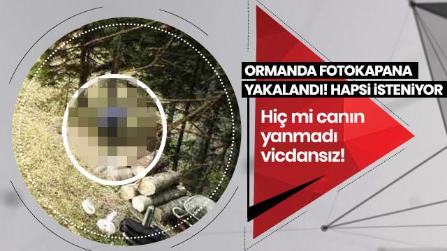 Ağaç keserken fotokapana yakalandı! Hem hapis, para cezası isteniyor