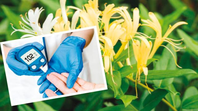 Hanımeli çiçeği şekeri dengeler