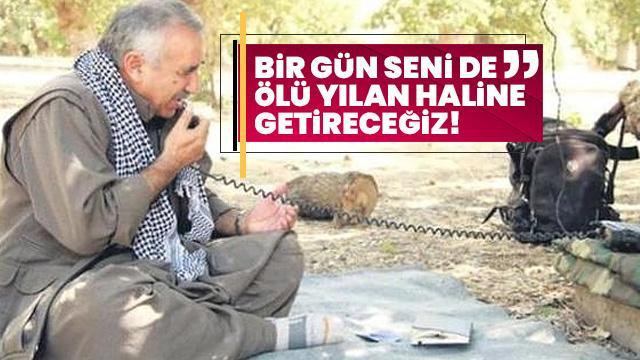 PKK'lı teröristler bir bir teslim oluyor, Kandil çıldırıyor