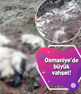 Osmaniye'de vahşet: 10 köpek ölüsü ve daha önceden atılan iskeletler bulundu