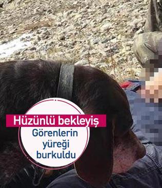 Dağda hayatını kaybetti, yanı başından ayrılmayan köpeğinin hüzünlü bekleyişi yürekleri burktu