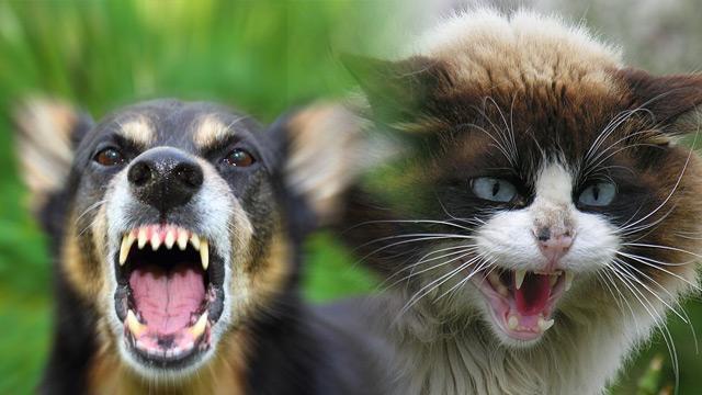 Düzce'de 45 kişiye kedi ve köpek saldırdı