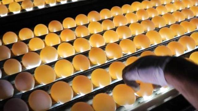 KDV oranının yüzde 1'e inmesiyle yumurta üreticisi nefes aldı