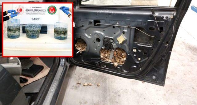 Bir otomobilin kapılarına gizlenmiş 5 bin 450 adet su kaplumbağası yakalandı