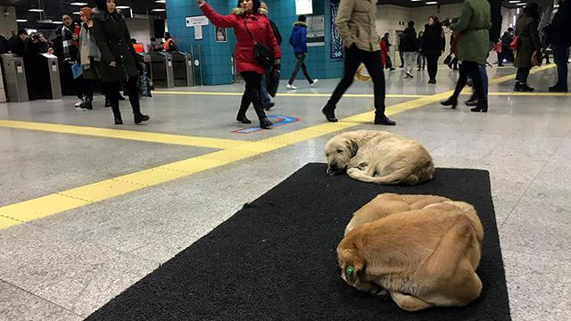 Üşüyen sokak köpekleri Marmaray'a sığındı