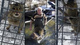 Havuzlardaki balıklarını çalan hırsız yaban kedisi çıktı