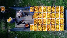 Türkiye'nin yaş meyve ve sebze ihracatını Doğu Akdeniz'in 3 ili sırtladı