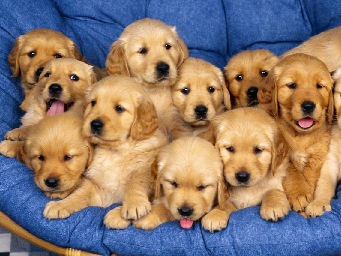 36 Maddelik kanun teklifi hazır! Sabıkası bulunana köpek verilmeyecek