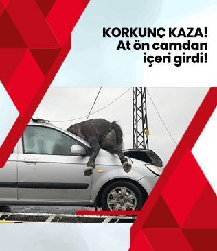 İstanbul'da yol kenarında başıboş gezen 3 at otomobilin çarpması sonucu telef oldu