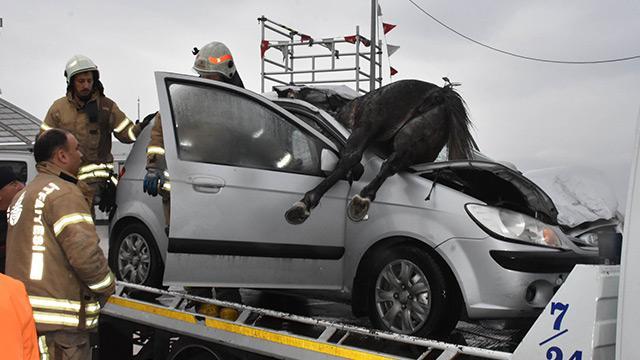 Büyükçekmece D-100'de otomobilin çarptığı 3  başıboş at öldü