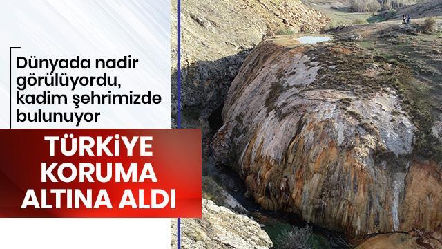 Dünyada nadir görülüyordu! Türkiye koruma altına aldı