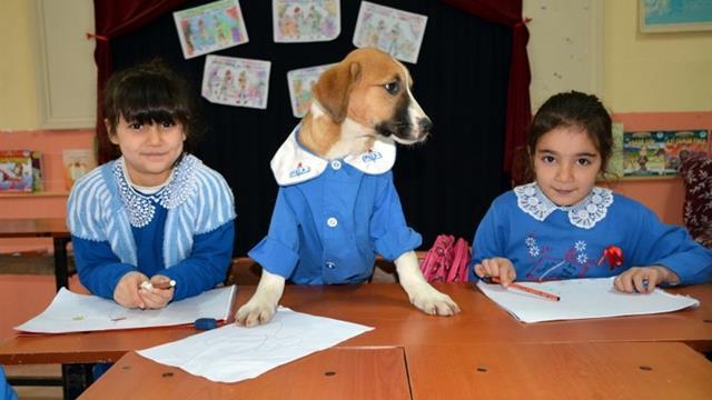 Herşey bir şaka ile başladı! Önlük giyen yavru köpek Fındık şimdi okulun en popüleri
