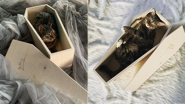 Rusya'da bir girişimci kedi tabutu satmaya başladı