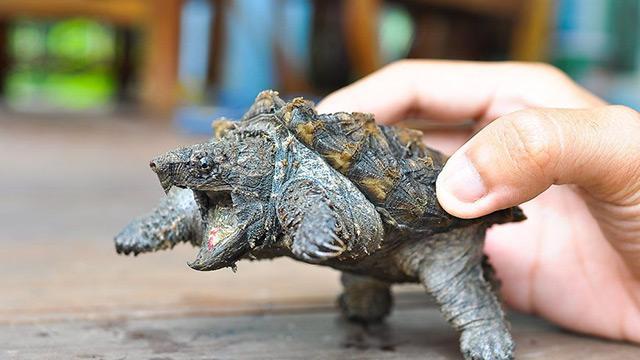 Sosyal medyada satışa çıkarılan kaplumbağalar koruma altına  alındı