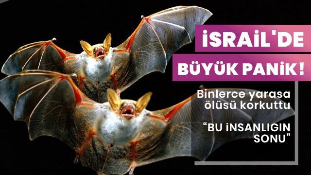 İsrail'de büyük panik! Binlerce yarasa ölüsü korkuttu