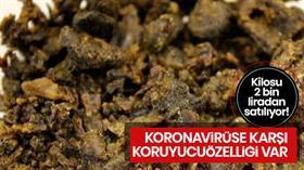 Propolisin kilosu koronadan sonra 2 bin liradan satılıyor 'Virüse karşı koruyucu özelliği var'