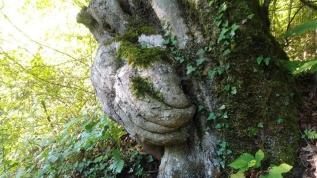 El figürü olan ağaç hayrete düşürdü! Koruma altına alınsın