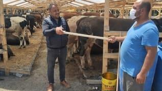 Kurban Bayramı yaklaşıyor hayvan pazarlarında hareketlilik başladı