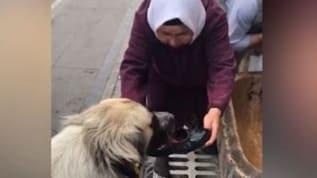 Köpeğe ayakkabısıyla su içiren yaşlı kadın: Kim olsa aynısını yapardı