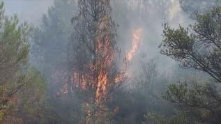 Sakarya'da korkutan orman yangını: Bölgeye çok sayıda ekip sevk edildi