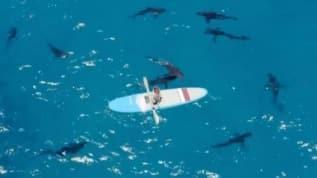 Eski NASA mühendisi ve Youtuber Mark Rober'den tehlikeli köpek balığı deneyi