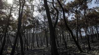 İnegöl'de 15 Eylül'e kadar ormanlara giriş yasaklandı