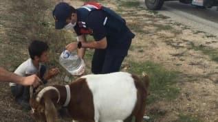 Köpek saldırısına uğrayan çobanın imdadına Jandarma yetişti