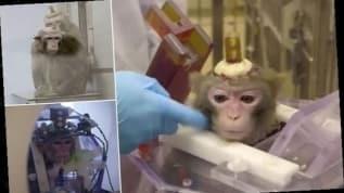 Belçika'da denek maymunlarına işkenceye tepki