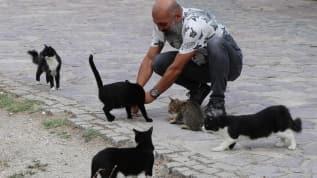 Beslediği kediler yüzünden mahkemelik oldu