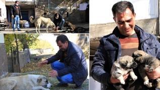 Köy halkı gitti sokak hayvanları muhtara kaldı