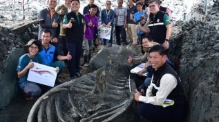 5 bin yıllık balina şoku
