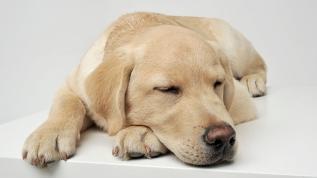 Köpeklerle insanların uyku alışkanlığı aynı
