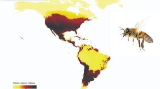 Dünyanın Arı Haritası çıkarıldı