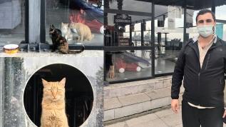 Bu kafe müşterilere kapalı, sokak kedilerine açık