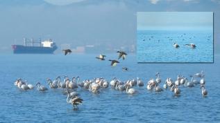 Flamingolar Körfez'i mesken tuttu