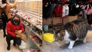 Sokak kedilerini ısıtan mağaza