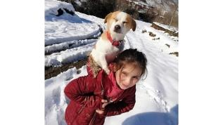 Hastalanan köpeğini sırtında taşıdı